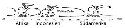 Walker-Zirkulation