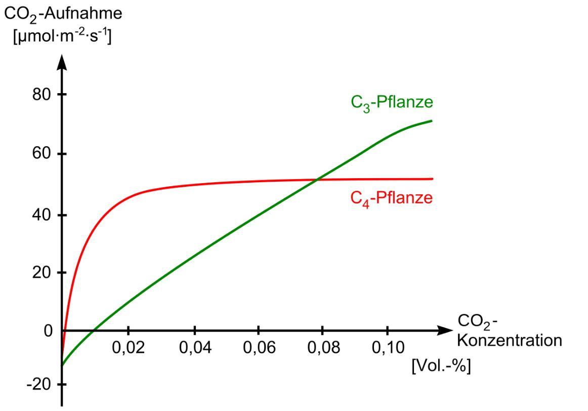 CO2 Aufnahme und Zuwachs