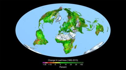 leaf-area change 1982 to 2015 NASAS